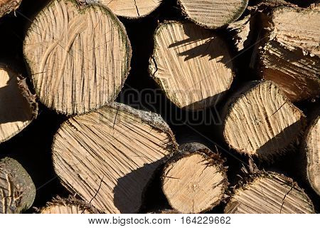 Leveled wood in the woodshed Heating season. Wood.
