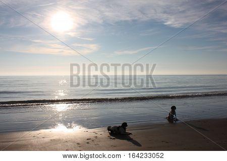 Working Type Springer Spaniel Pet Gundog Lying On A Sandy Beach At Sunset