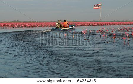 UDON THANI,Thailand - January 7 ,2017 : Boat driver in Red Lotus Sea UdonThani.
