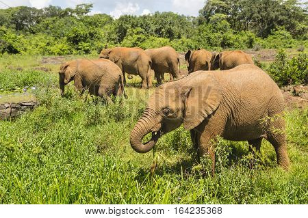 Baby Elephants In Nairobi National Park, Kenya