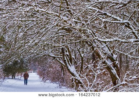Uzhgorod Ukraine - January 5 2017: Silhouette of a man who is walking in park a cold winter afternoon during heavy snowfall.
