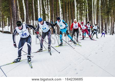 Kyshtym Russia - March 26 2016: group of skiers athletes men in forest free style uphill during Championship on cross country skiing
