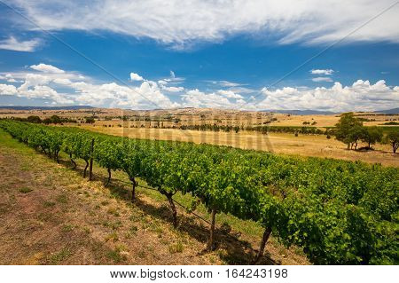 A view from near Delatite Winery of the Howqua Valley towards Mt Buller on a hot summer's day in Victoria, Australia