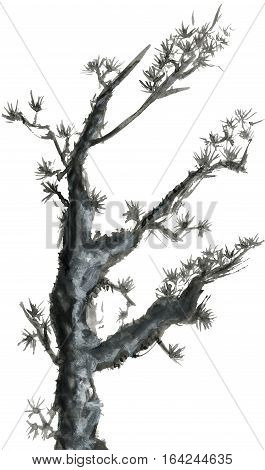Pine branch isolated on a white background. Ink drawing in the Chinese style.