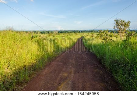 Typical African dirt and mud track with high elephant grass growing on either side, Gabon, Central Africa.