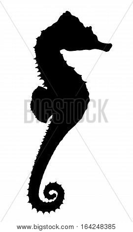Computer generated 2D illustration with the silhouette of a seahorse