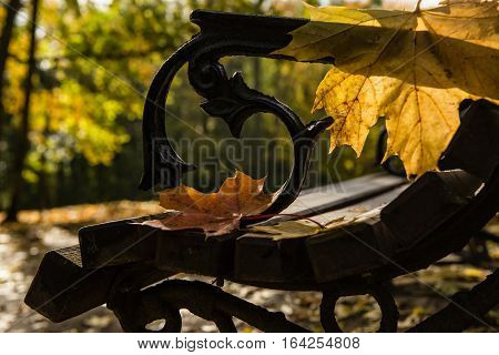 Bench in the autumn park with maple leaves. Lonely souls meeting