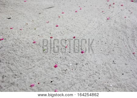 the petals of the flowers pale violet colors are scattered by the wind on the white sand, selective focus, sand particles