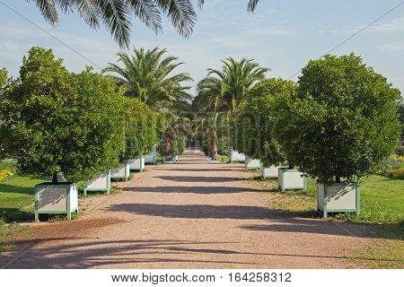 Orangerie garden in Darmstadt (Hesse, Germany) in summer