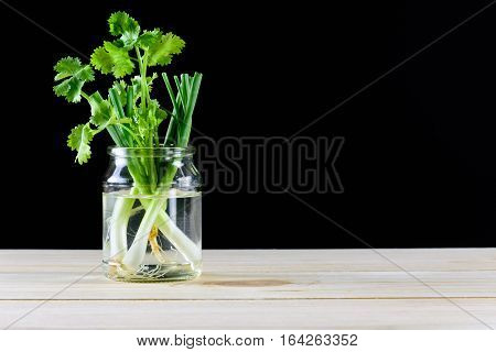 Fresh cilantro and Spring onions in glasses on wood table isolated on black