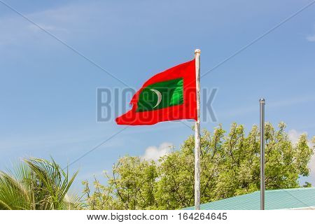 A Palm tree and Flag of Maldives