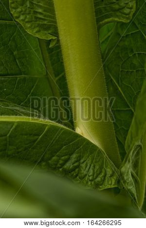 A tiny shoot growing between the leaf and stem is called a