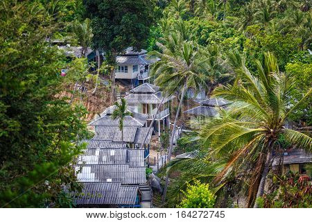 Roof bungalows in the middle of the palm jungle