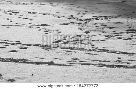 surface of soft snow with trails of human and animal footsteps