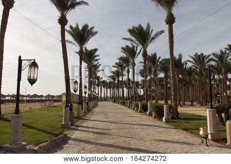 An oasis of palm trees and greenery photo. Embankment along the beach in Makadi Egypt