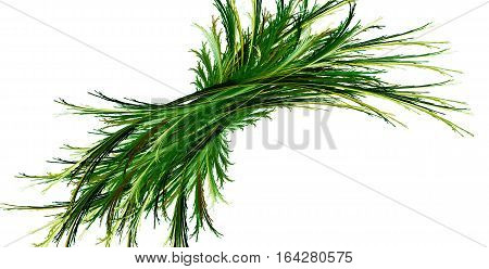 abstract flora, isolated on the white background