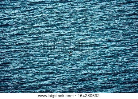 close up shot of the sea surface