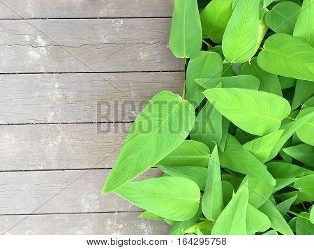 Green pond plant growing beside a boardwalk