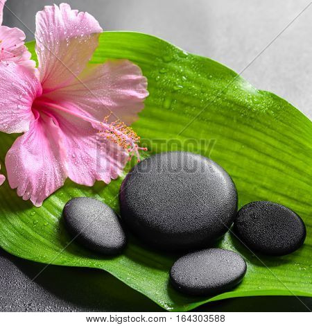 Beautiful Spa Concept Of Pink Hibiscus Flowers And Zen Basalt Stones On Big Green Leaf With Drops, C