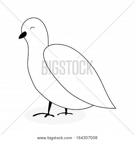 White dove animal vector. Dove and peace white bird isolated pigeon cartoon illustration
