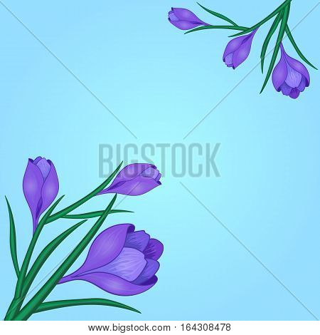 Vector illustration with crocus or saffron and hearts.An elegant bouquet of purple flowers. Can be used as greeting cards, wedding invitations, birthday, spring or summer holiday, festival, celebration.