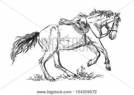 Mustang-horse in gallop and jump. Vector illustration
