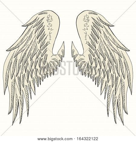 Wings of bird, angel. Hand drawn angel wing. vector