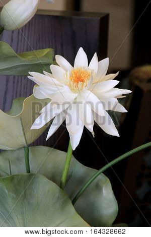 Vertical image of large white silk water lily tucked between big lily pads of plant.