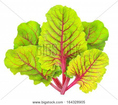 Isolated Chard Leaves
