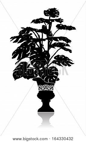 Silhouette of a big monstera in an elegant flowerpot.