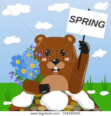 Groundhog day. Greeting card, banner. Marmot with a bouquet of first spring flowers. Vector illustration