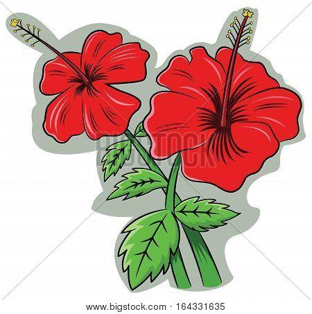 Hibiscus Rosa Sinensis Flower Cartoon Illustration Isolated on White