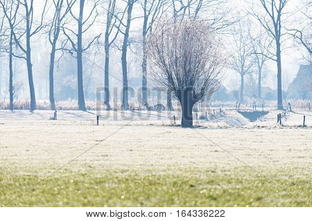 Bare pollard willow in dutch winter landscape. Geesteren. Achterhoek. Gelderland. The Netherlands.
