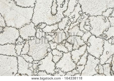 Light grey stone texture granite surface. Rock pattern background. Crustose areolate lichens that grow on rock. Aspicilia cinerea.
