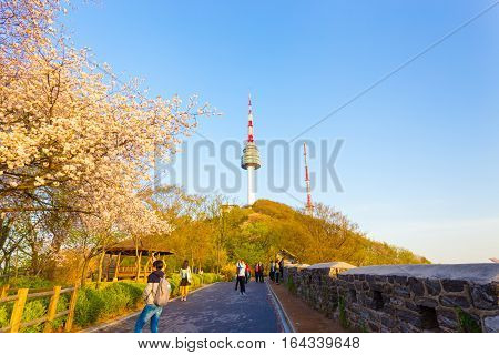 Namsan Tower Cherry Blossom Tourists Wall Seoul