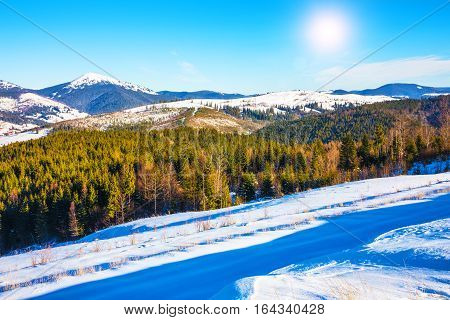 Scenic winter panorama of Carpathian Mountains with snowy peaks extreme terrain slopes and pine tree wood forest in Ukraine