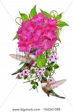 Flower composition. Isolated on white background. Small birds hummingbirds. The inflorescence is bright pink hydrangeas green leaves delicate flowers.