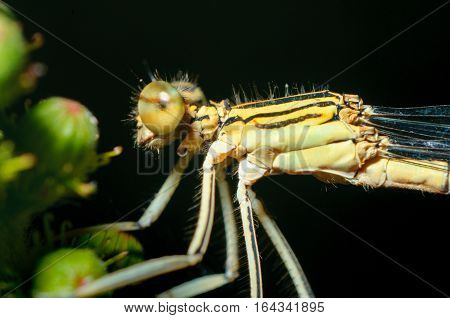 Close-up portrait dragonfly. Eating insect. insect fly or a bee on a flower