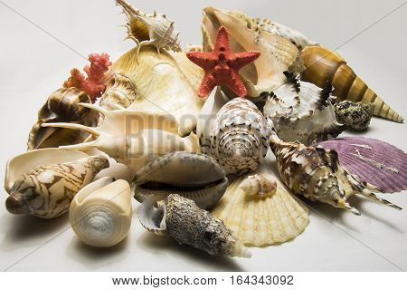 Shells Collection Isolated On White Background