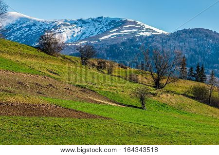 Snowy Tops Of Carpathians In Spring