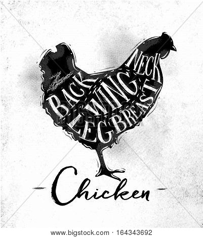 Poster chicken cutting scheme lettering neck back wing breast leg in vintage style drawing on dirty paper background