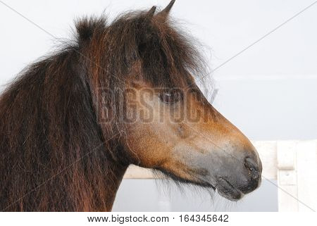 Head of a horse with a mane on the farm
