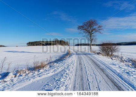 Lonely tree on the snowy winter road