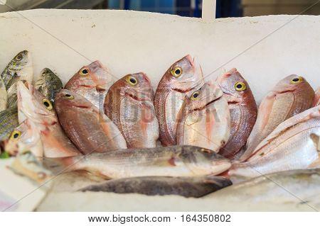 Fresh raw sea fish at market in Asia near fishermen village