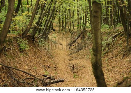 Beautiful landscape in a summer forest: an abandoned ravine and trees in green foliage