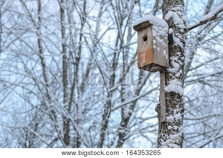 nesting-box in winter. Cold white winter outdoors