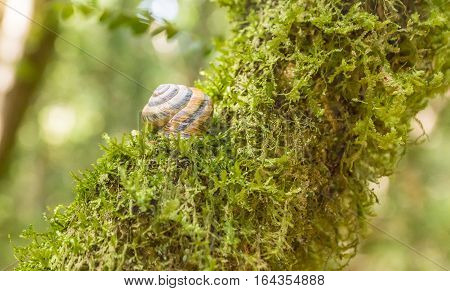 Big snail on a branch covered with moss