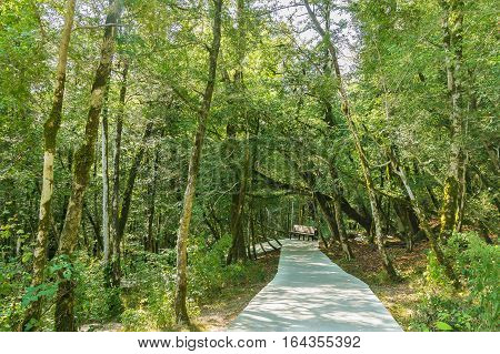 The yew-and boxwood grove in the mountains of Sochi Russia