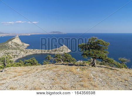 Seascape with relict juniper trees. Crimea September.