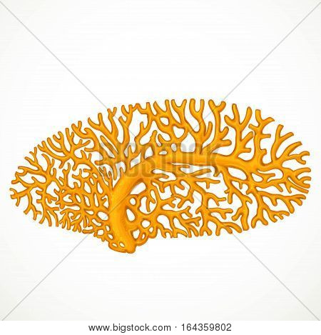 Big Orange Corals Sea Life Object Isolated On White Background
